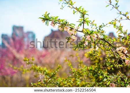 Sunny spring day on New York's High Line - stock photo