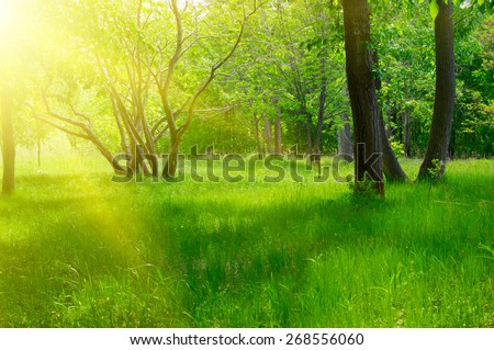 Sunny spring forest at morning - stock photo