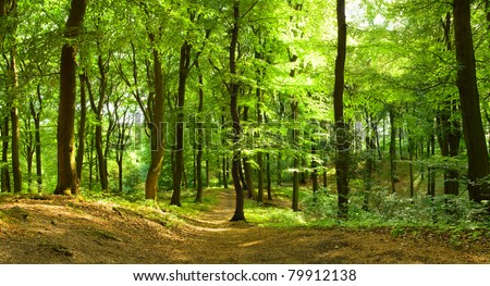 Sunny summer forest with footpath - stock photo