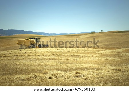 Sunny summer season wheat field with working yellow combine.