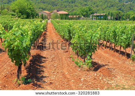 Sunny vineyard surrounded by hills near Menerbes, Provence-Alpes-Cote d'Azur, France