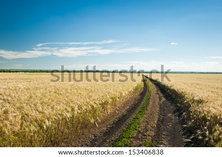 Sunny wheat field and blue sky