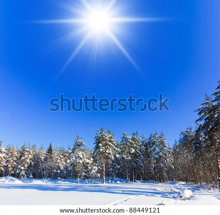 Sunny Winter - stock photo
