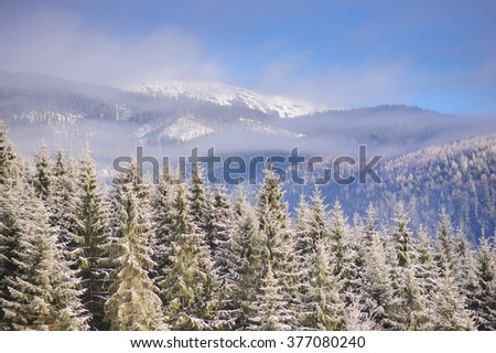 Sunny winter day. Forest in snow. In the background haze, clouds and blue sky above the mountain range. - stock photo