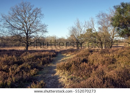 Sunny winter day in the moorland in the Netherlands
