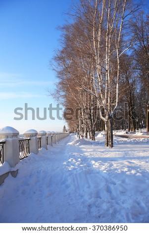 Sunny winter day. Snow path near birch trees in park - stock photo
