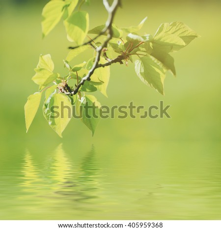 Sunny young green spring  leaves, natural eco background with water reflection