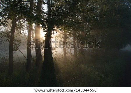 sunrays at morning