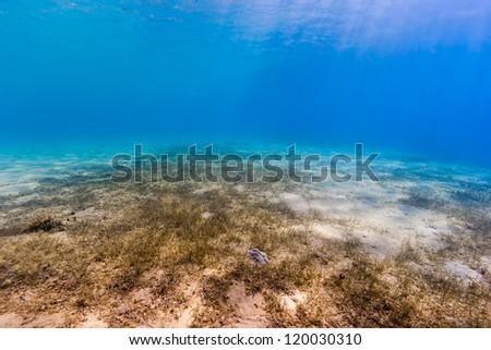 Sunrays illuminate a seagrass and sand bottom underwater - stock photo