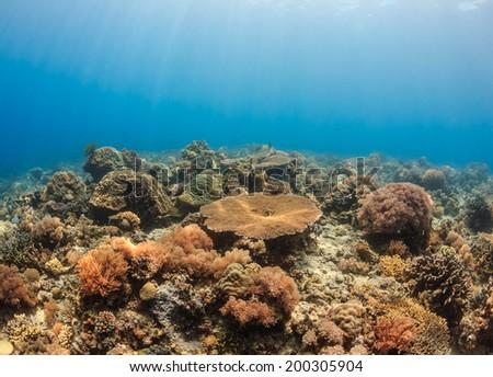 Sunrays illuminate a shallow tropical coral reef - stock photo
