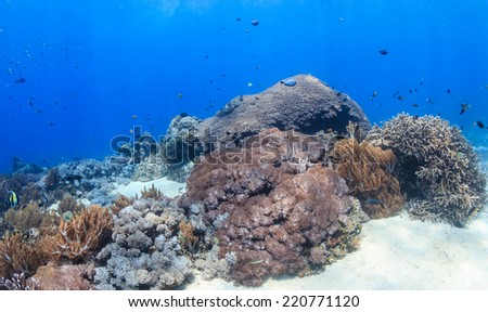 Sunrays on a shallow, colorful tropical coral reef - stock photo