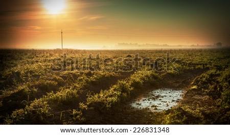 Sunrise above hazy field - cold autumn morning. Peaceful countryside landscape. - stock photo