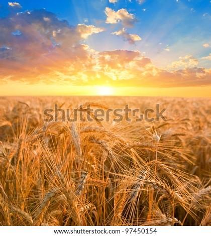 sunrise among a wheat fields - stock photo