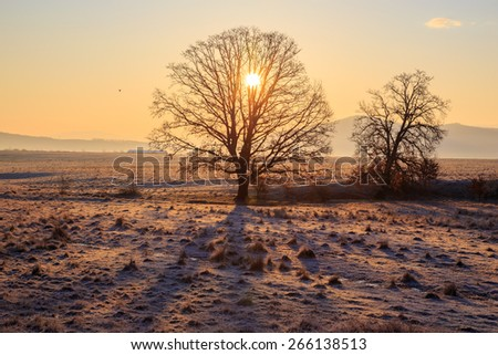 Sunrise and a tree at the horizon