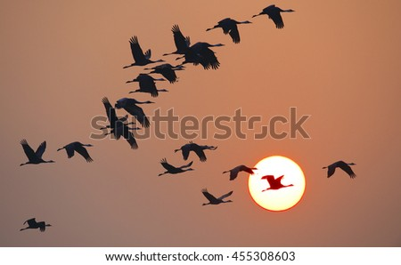 sunrise and crane in japan