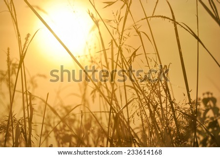 Sunrise and dew on rice seedlings - stock photo