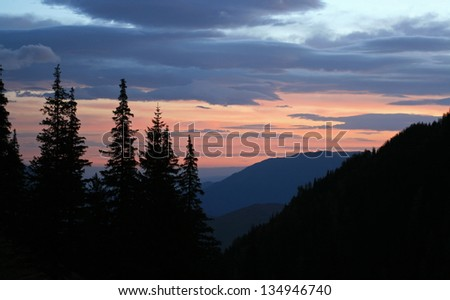 Sunrise and pine silhouette - stock photo