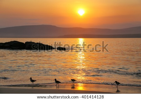 Sunrise at La Mina Beach with silhouetted sandpipers, Paracas National Reserve, Peru. Main purpose of the Reserve is to protect marine ecosystem and historical cultural heritage. - stock photo