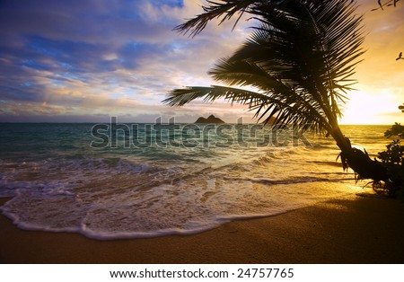 Sunrise at Lanikai Beach on the Windward side of Oahu, Hawaii through the branches of a palm tree at water's edge - stock photo