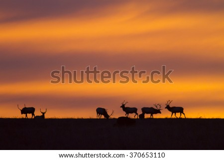 sunrise at Maxwell Wildlife Preserve in Kansas; elk on the horizon