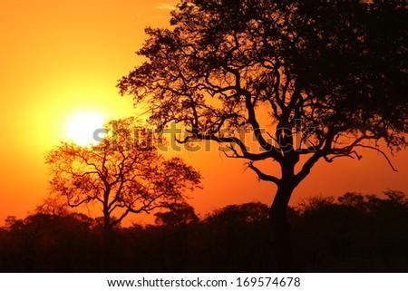 Sunrise at Okavango River. Namibia - stock photo
