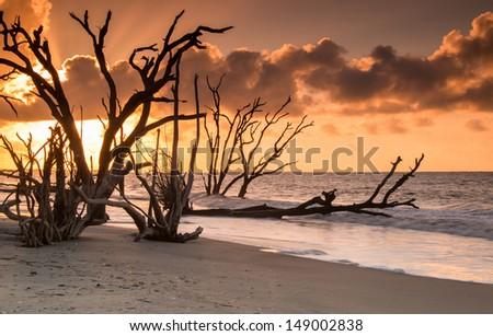 Sunrise at the Boneyard at Botany Bay Reseve on Edisto Island in South Carolina - stock photo