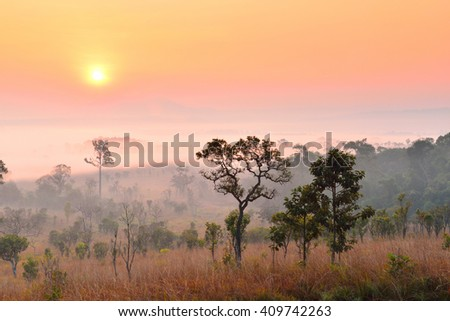 Sunrise at Tung Salang Luang National Park in Phetchabun, Thailand