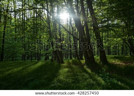 Sunrise behind forest