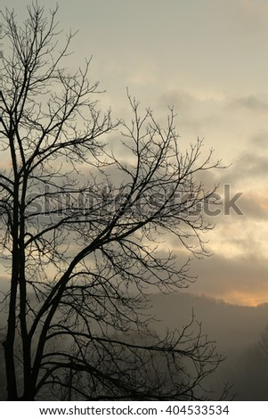 sunrise branches background