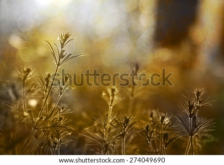 Sunrise close up of beautiful plants in the forest - stock photo