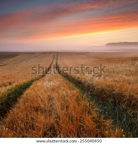Sunrise field in north Poland/ Sunrise field light - stock photo