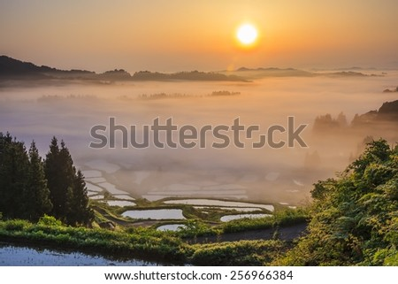 Sunrise from sea of clouds and rice terraces, Hoshitouge, Niigata, Japan