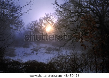 Sunrise in a winter foggy forest