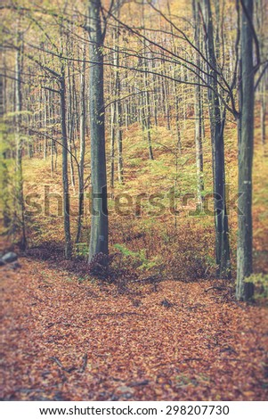 Sunrise in autumn forest - stock photo