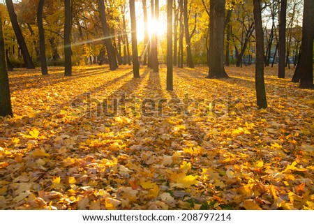 Sunrise in autumn forest. The beautiful morning - stock photo