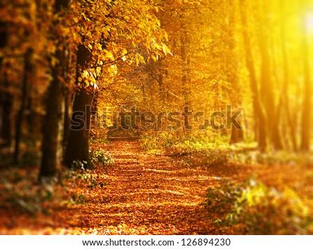 Sunrise in autumn forest. Tilt-shift lens - stock photo