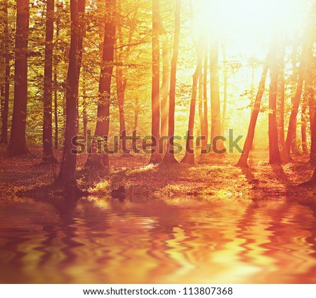 Sunrise in autumn forest with river - stock photo
