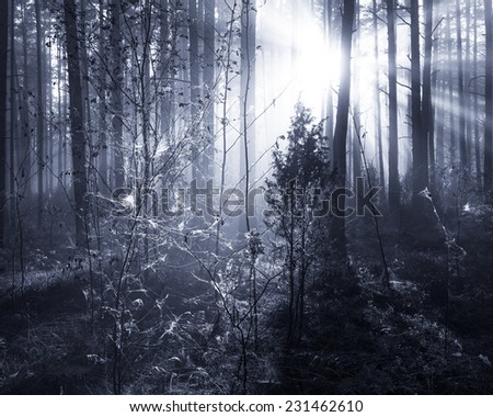 Sunrise in forest in black and white