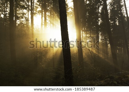 Sunrise in forrest