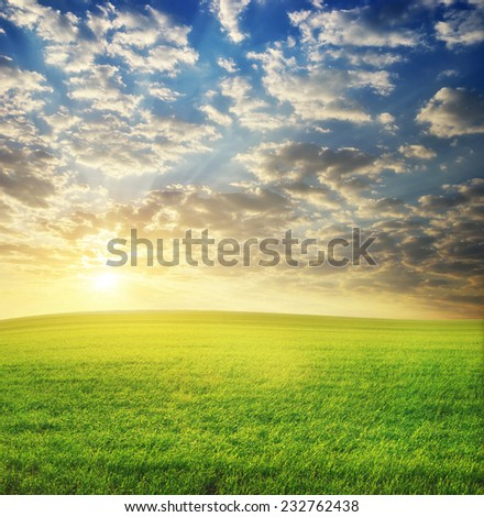 Sunrise in grean meadow. Nature composition. - stock photo