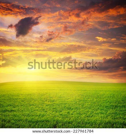 Sunrise in green meadow. Nature composition.