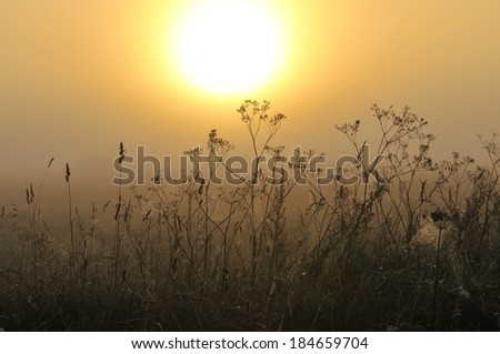 Sunrise in meadow