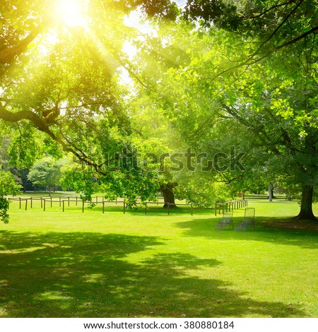 Sunrise in the beautiful park - stock photo