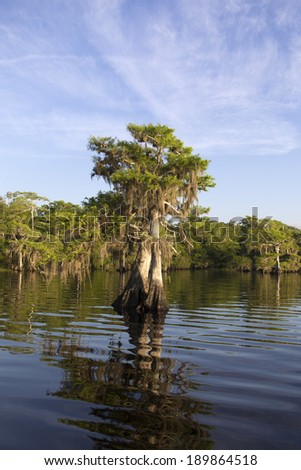 Sunrise in the Cypress Trees at Blue Cypress Lake in Indian River County Florida