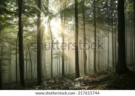 Sunrise in the early autumn deciduous forest. - stock photo