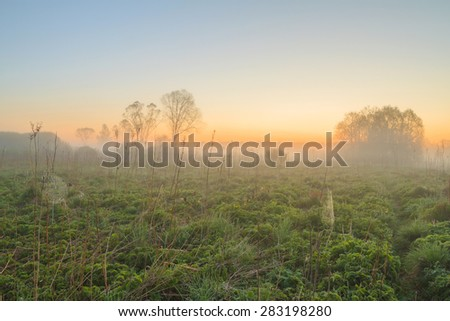 Sunrise in the field at the river with fog. The rays of dawn sunlight illuminate the clearing with wildflowers and grass. Dawn at the river. Web in dew in the morning