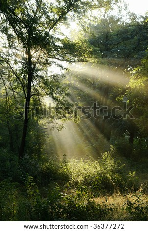 Sunrise in the foggy morning - stock photo
