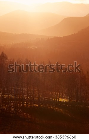 Sunrise in the forest at Lynwilg, Cairngorms in the Scottish Highlands, UK. - stock photo