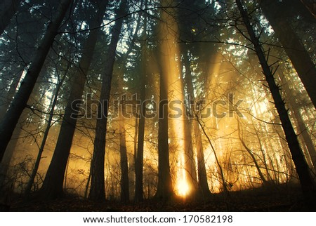sunrise in the forest, fog in the autumn forest