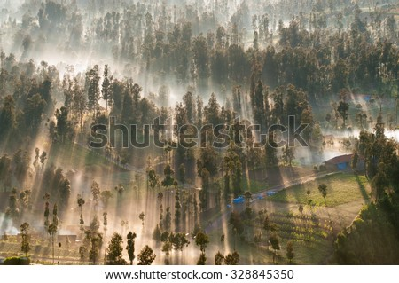 Sunrise in the forest near Bromo volcano, Java island, Indonesia - stock photo